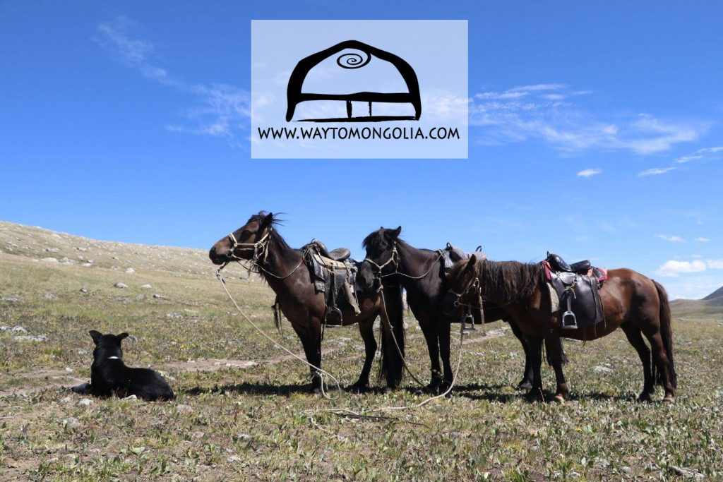 Photo gallery of Mongolia