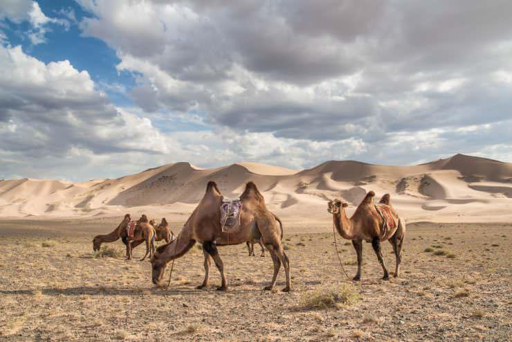 Gobi desert tours in Mongolia