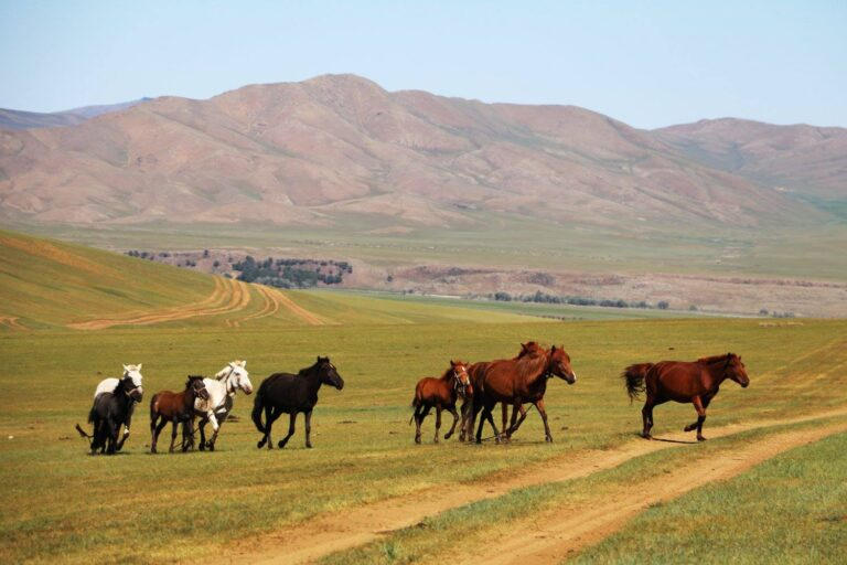Top 10 tour destinations of Mongolia for tourists