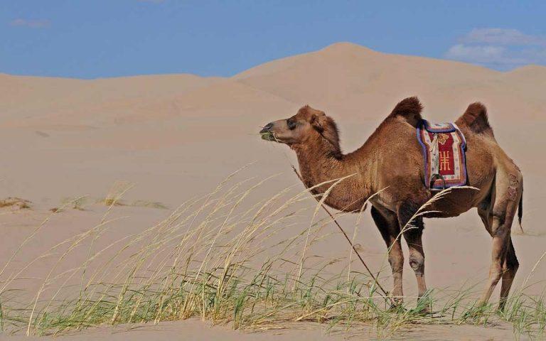 Mongolian tour operators