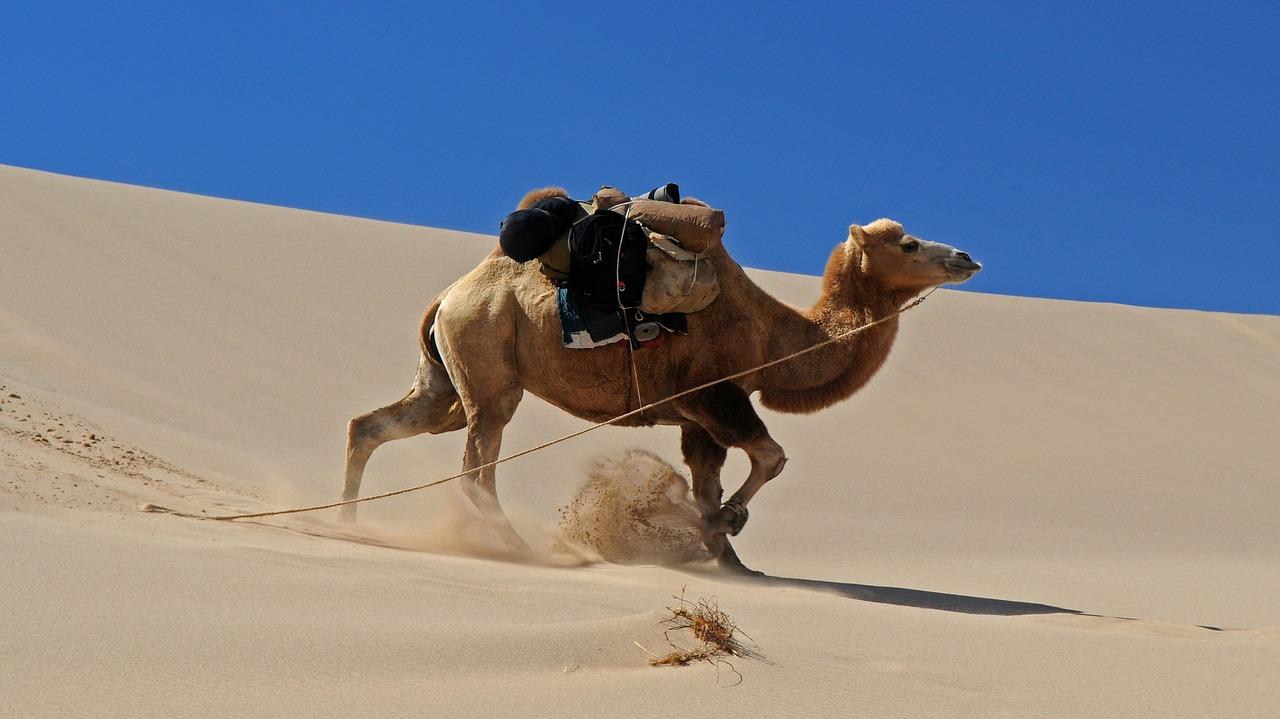 The Mars is in the Gobi desert